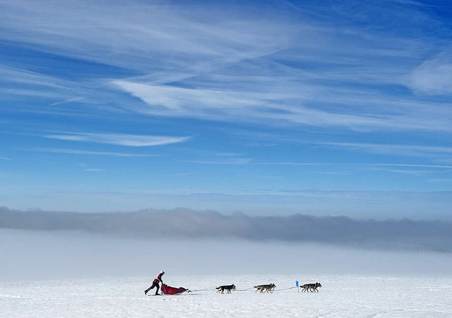 A musher competes with his dog-sled during the Trans-Thuringia race, one of the biggest dog-sled races with purebred dogs in central Europe, in the Thuringian Forest near Fehrenbach, central Germany, Saturday, Feb. 14, 2015. Around 500 sled dogs and their mushers covered a distance of nearly 280 kilometers in seven runs. (AP Photo/Jens Meyer)