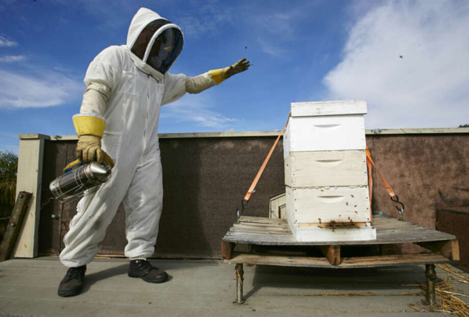 In this photo taken Friday, Jan. 31, 2014, Sweet Bee Removal professional beekeeper, Tyson Kaiser uses a smoker before expanding a beehive hosted on a roof in Los Angeles. The Los Angeles City Council is expected to vote Wednesday, Feb. 12, 2014, on whether to begin the process of granting bees raised in residential areas legal residency in backyards across the city. (AP Photo/Damian Dovarganes)