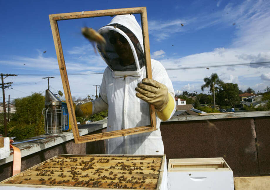 In this photo taken Friday, Jan. 31, 2014, Sweet Bee Removal professional beekeeper, Tyson Kaiser expands a beehive hosted on the roof of a home in Los Angeles. The Los Angeles City Council will vote Wednesday, Feb. 12, 2014 whether to begin the process of granting urban bees legal residency in residential areas after a lengthy lobbying effort from bee lovers of all stripes. The vote comes against the backdrop of colony collapse disorder, a worrisome die-off of honeybees that has captured the attention of environmentalists and farmers worldwide. (AP Photo/Damian Dovarganes)