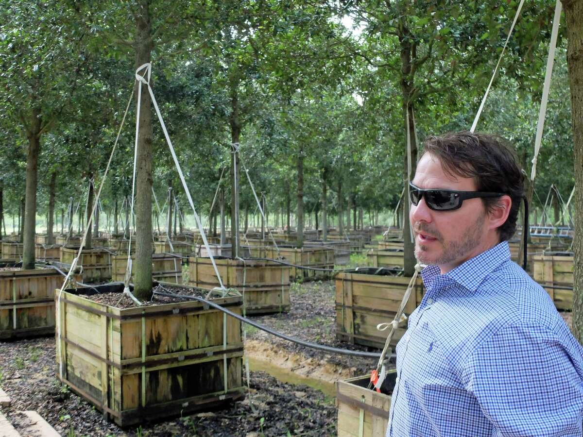 Jonathan Judice, senior vice president of Environmental Design in Tomball, in one of the groves of 840 Cathedral Live Oaks that will be planted along Post Oak Boulevard during its transformation to a pedestrian-friendly space.