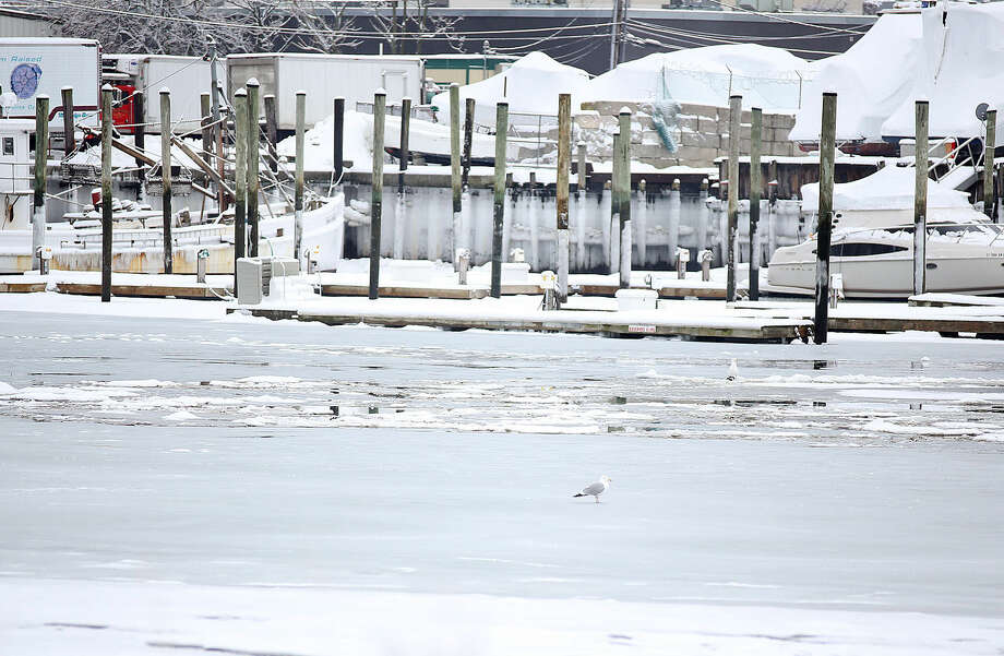 A seagull rests on the partially frozen Norwalk River after the snow storm Sunday morning. Hour Photo / Danielle Calloway