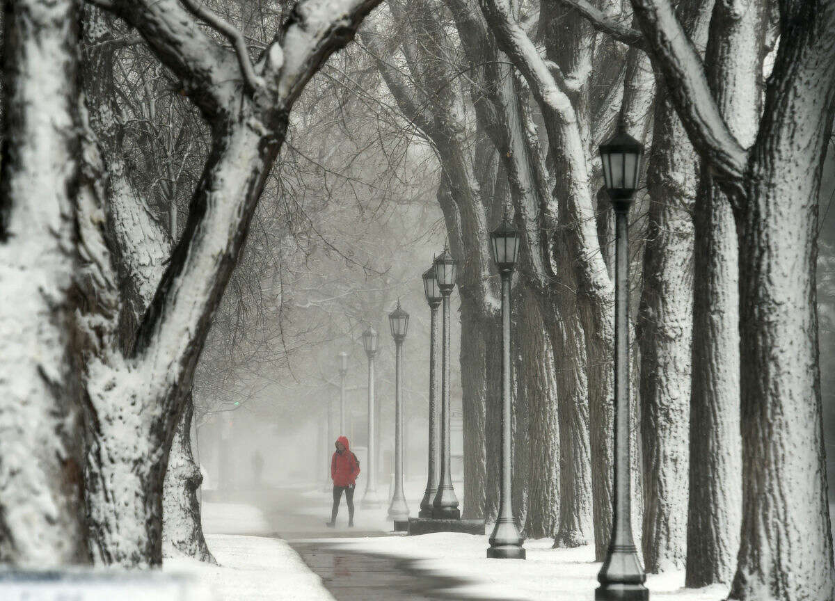 A pedestrian walks through snow covered trees at Colorado College on Wednesday, March 23, 2016, in Colorado Springs, Colo. Heavy snow and strong winds have shut down some highways and schools in Colorado and canceled flights at Denver's airport. (Jerilee Bennett/The Gazette via AP) MAGS OUT; MANDATORY CREDIT
