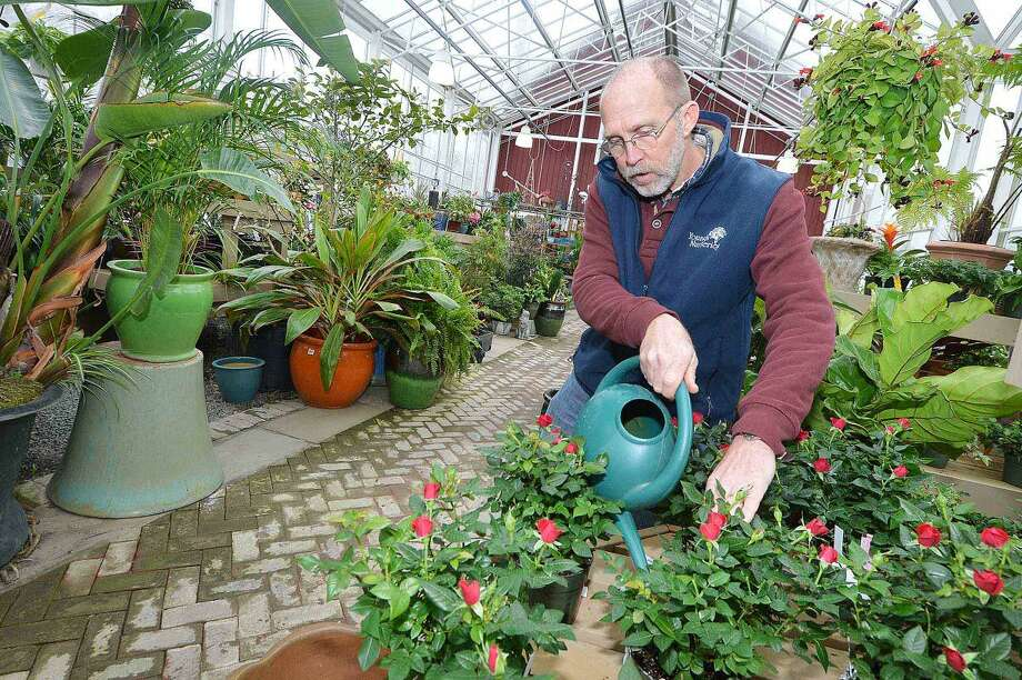 Young's Nurseries Vice President Dave Gindek waters some tropical plants in this file photo from February 2015. The business is up for sale, and will soon close its doors after 86 years in Wilton.
