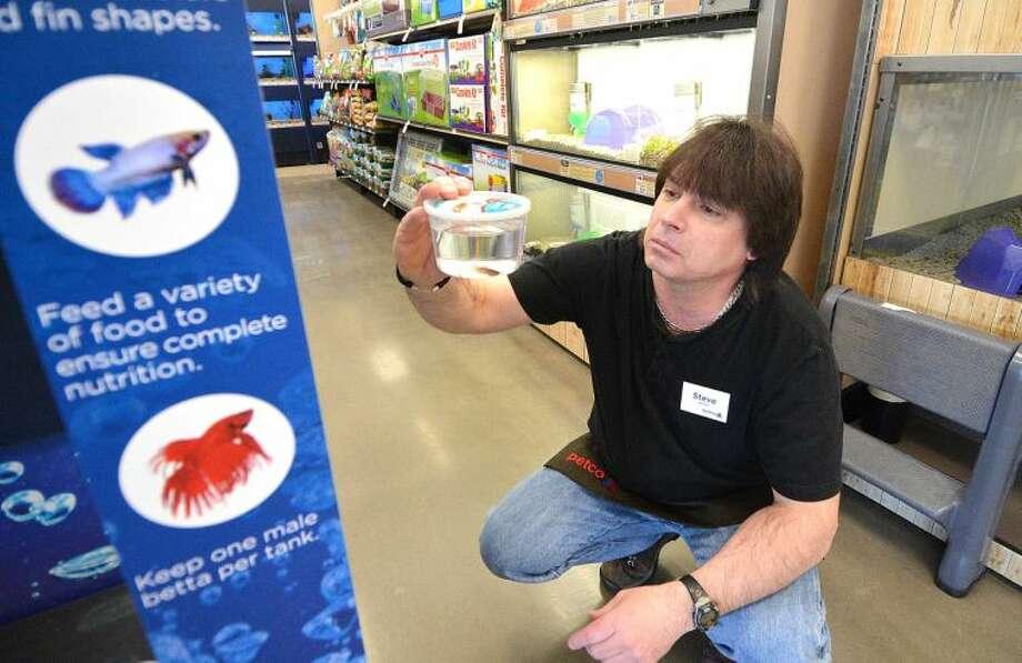Hour Photo/Alex von Kleydorff Steve Partin checks some of the live fish at the 'Betta Lounge' at Petco in the Walmart Center Norwalk