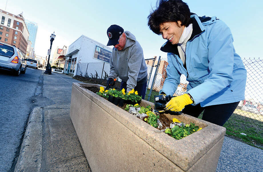 Hour photo / Erik Trautmann The Stamford Downtown Streetscape Volunteers including Michelle Alexander and Jim Sabia mark the advent of Spring with the planting of thousands of pansies in planters along Broad Street to brighten the downtown area.