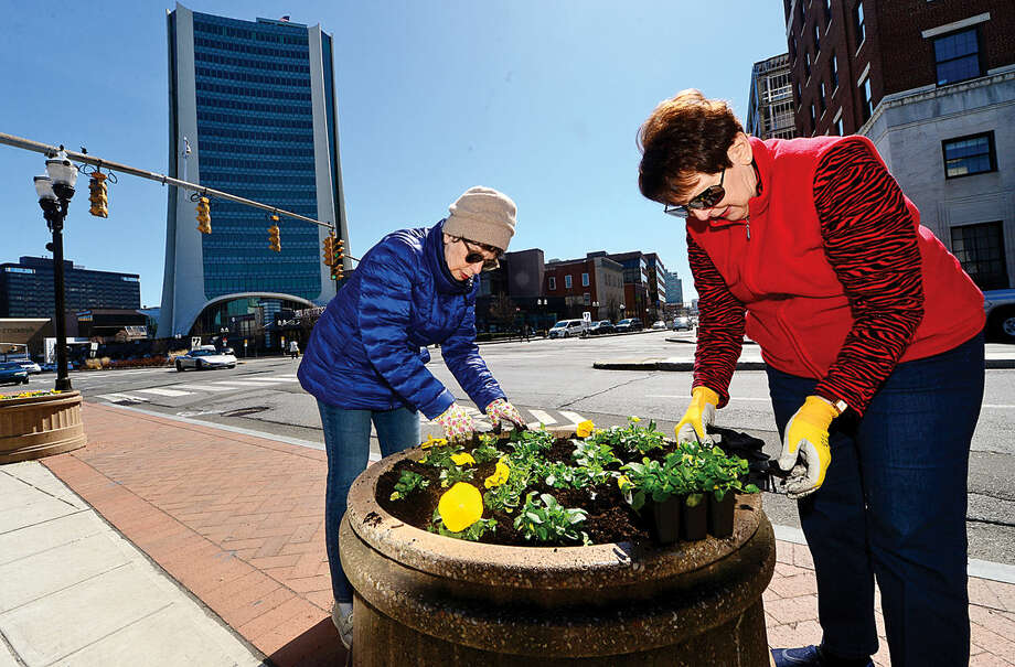 Hour photo / Erik Trautmann The Stamford Downtown Streetscape Volunteers including Judith DeRose and Lenore DiPalma mark the advent of Spring with the planting of thousands of pansies in planters along Broad Street to brighten the downtown area.