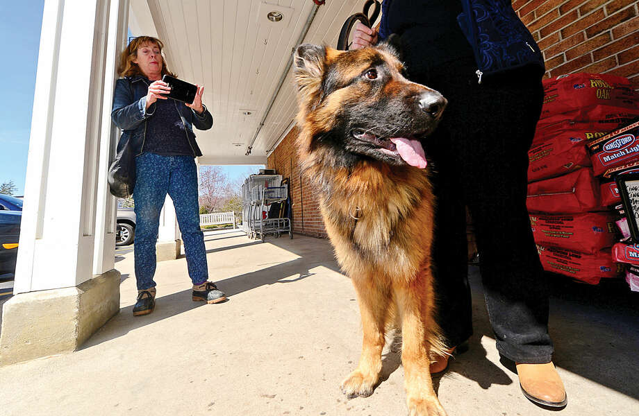Wilton resident Tigger Mann takes a photo of Kingsley, a German shepherd from high-kill shelter, during a Passion Works Rescue adoption event at Village Market Wednesday.