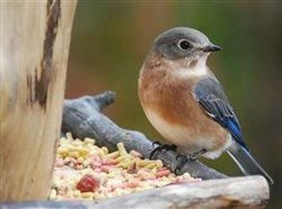 Can't read it, don't feed it: Why wild bird-lovers should choose top-of-the-crop natural feed