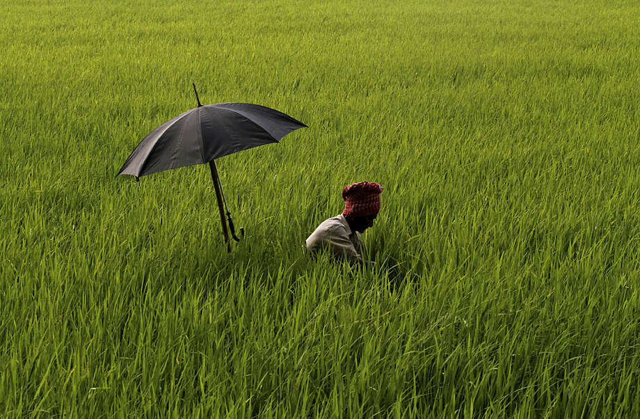 An elderly Indian farmer has his umbrella mounted on his walking stick to protect himself from the scorching sun as he works on removing weed at a paddy field on the outskirts of Bhubaneswar, Orissa state, India, Tuesday, April 5, 2016. India's central bank on Tuesday cut its key interest rate by a quarter of a percentage point and hinted at other measures to boost liquidity and spur economic growth. (AP Photo/Biswaranjan Rout)