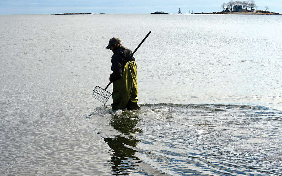 Hour photo / Erik Trautmann Dean Casinelli goes shellfishing off the shore of Calf pasture Beach during a mild Saturday morning.