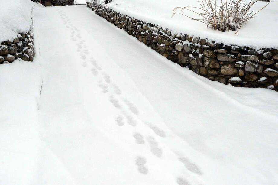 Hour Photo/Alex von Kleydorff Just footprints down the driveway in Thursday's snow