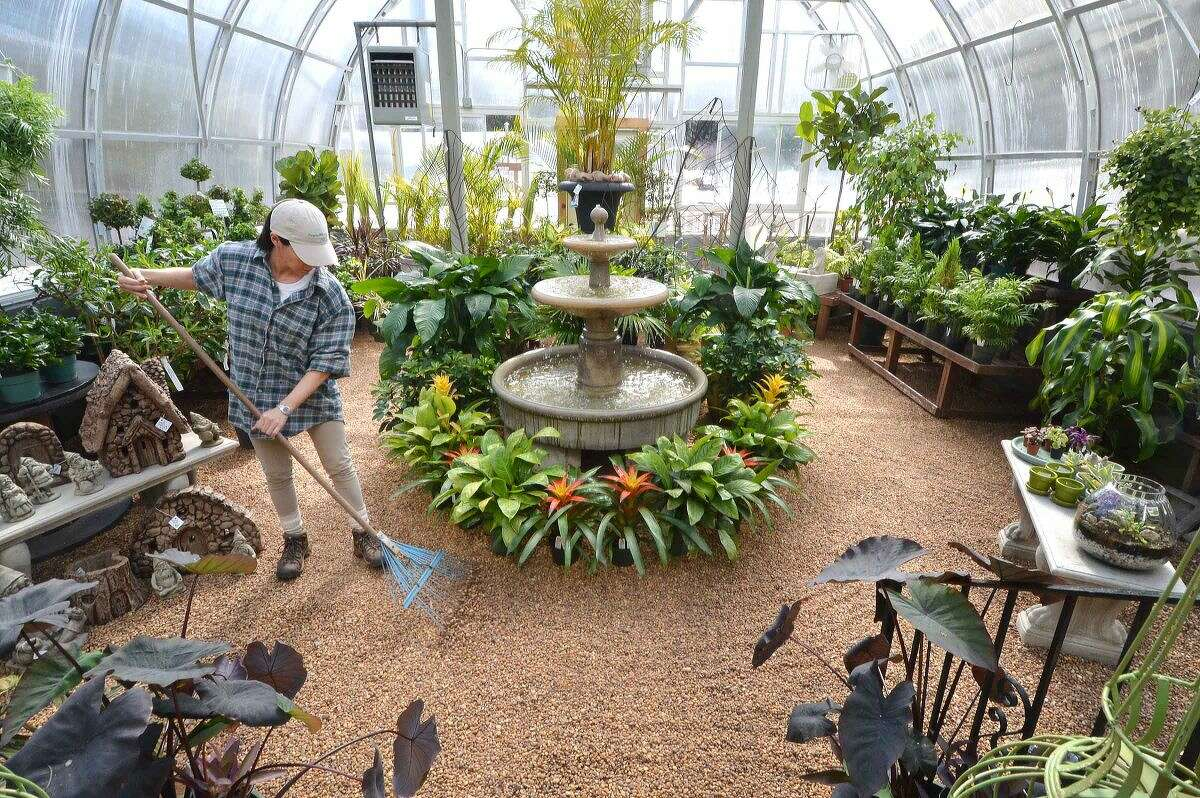 Hour Photo/Alex von Kleydorff At Reynolds Farms and Country Garden Center, Associate Alicia Dennelly rakes the landscaping pebbles inside of the houseplant greenhouse after taking care of the many shade and sun loving tropicals. The crew is busy working on getting plants started in other greenhouses for spring which is just a week away, until then these are ready to brighten any home.