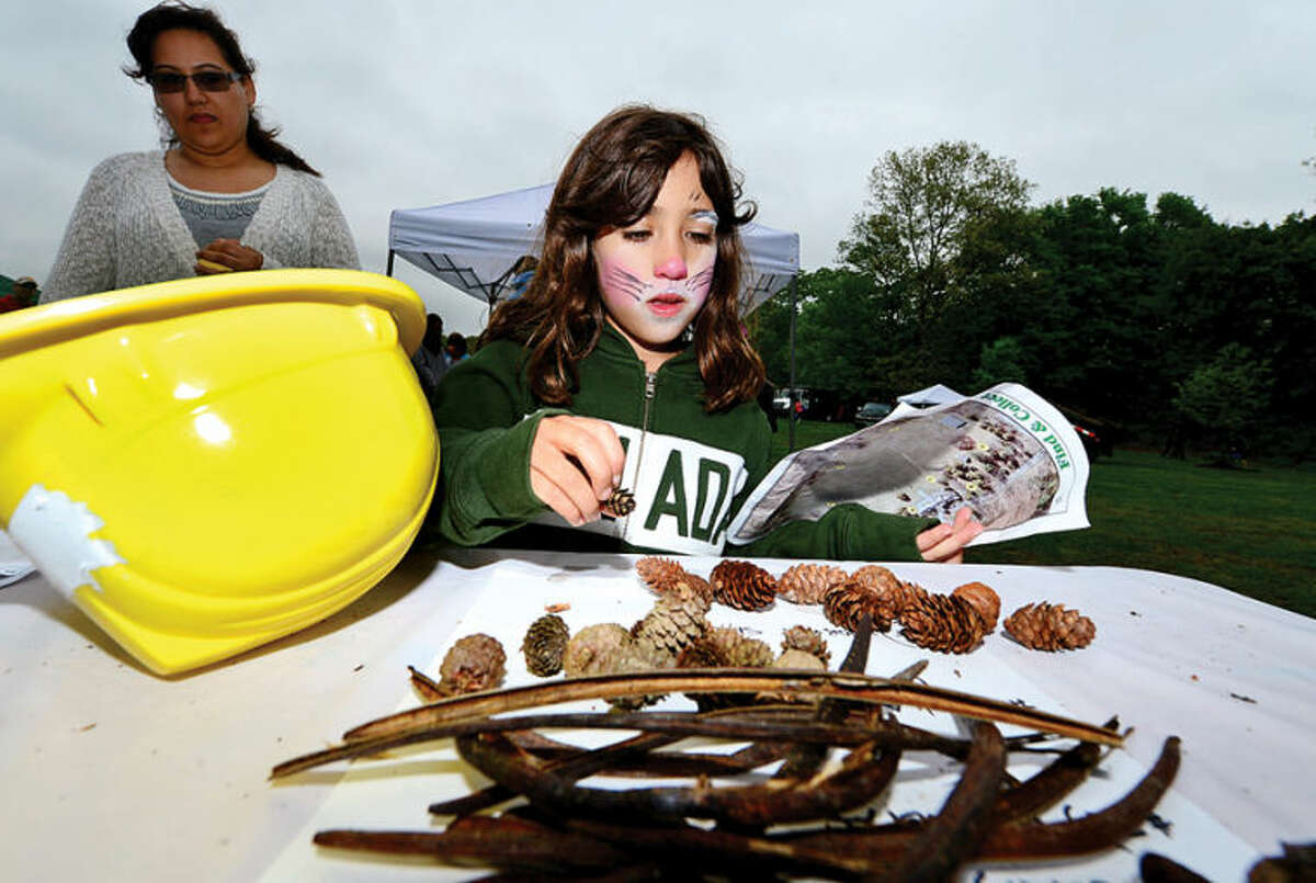 Jordane Macias, 8, counts out her pine cones from a Nature Scavenger Hunt at The 7th annual Norwalk Wilton Tree Festival at Cranbury park Saturday. Hour photo / Erik Trautmann