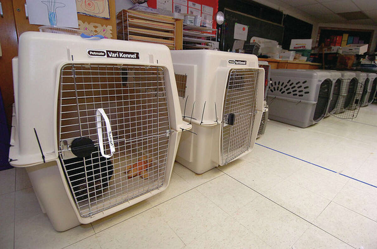 'Midnight' rests in the emergency pet shelter set up at Miller Driscoll school for overnight guests pets. Animal Control Officer Bob Napoleon has made kennel crates available to the more than a dozen dogs that have been staying there on and off since Saturday.
