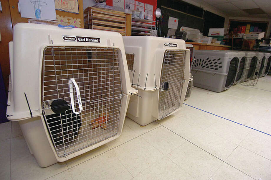'Midnight' rests in the emergency pet shelter set up at Miller Driscoll school for overnight guests pets. Animal Control Officer Bob Napoleon has made kennel crates available to the more than a dozen dogs that have been staying there on and off since Saturday. / 2011 The Hour Newspapers