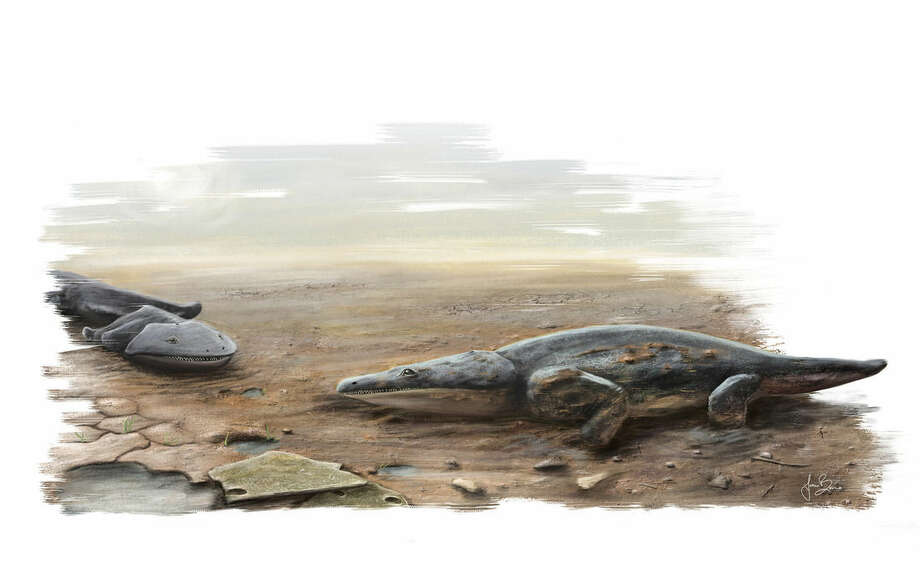 "In this image made available by the University of Edinburgh on Tuesday March 24, 2015 shows an artist's rendition of a previously unknown species of crocodile-like ""super salamander"" that roamed the Earth more than 200 million years ago. University of Edinburgh researchers say the species discovered in Portugal was among the Earth's top predators. The team said Tuesday it was part of a wider group of primitive amphibians that were widespread at the time. (AP Photo/ University of Edinburgh, Joana Bruno)"