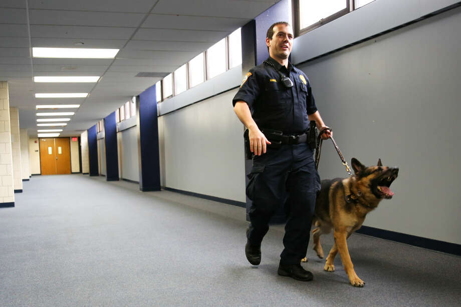 Officer Steven Rangel walks K-9 Unit Enzo through the halls of Wilton High School during an illegal drug search.