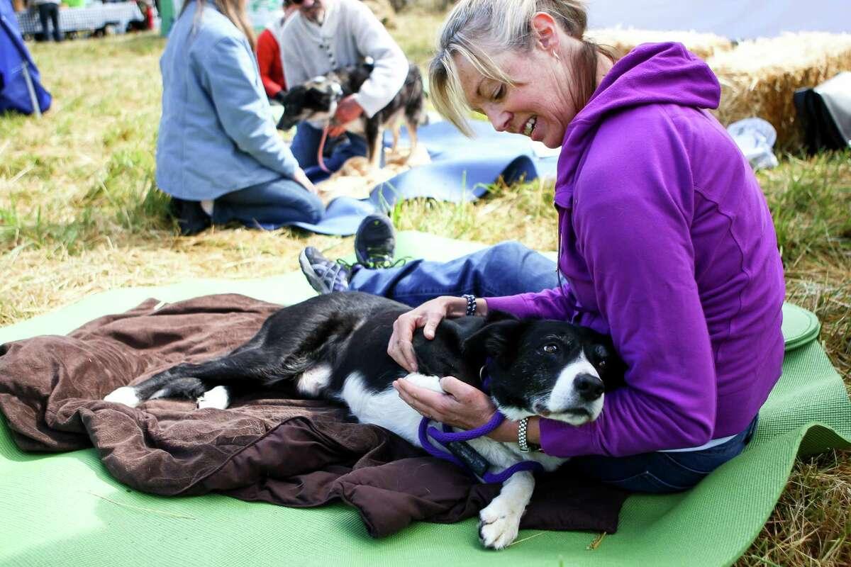 Amy Wright, an animal masseuse, gives Chile a massage.