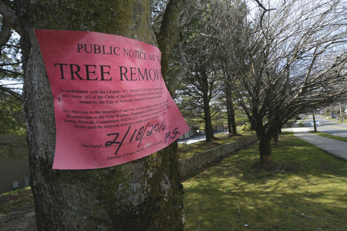 Hour Photo/Alex von Kleydorff A tree has a notice to remove near the Perry Ave. bridge in Norwalk. The bridge is expected to be closed for repairs soon