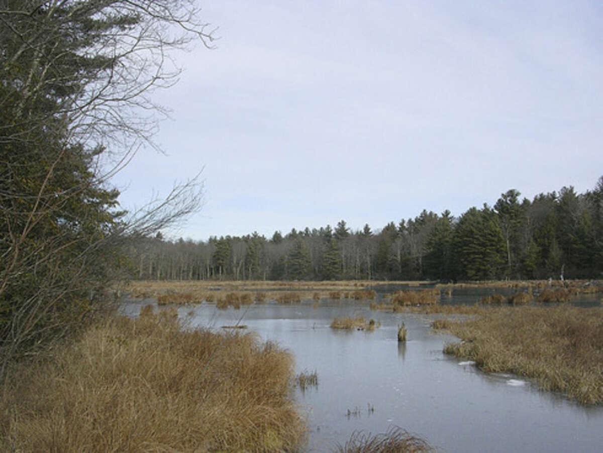 Photo by Rob McWilliams Swampy pond beside John Muir Trail.