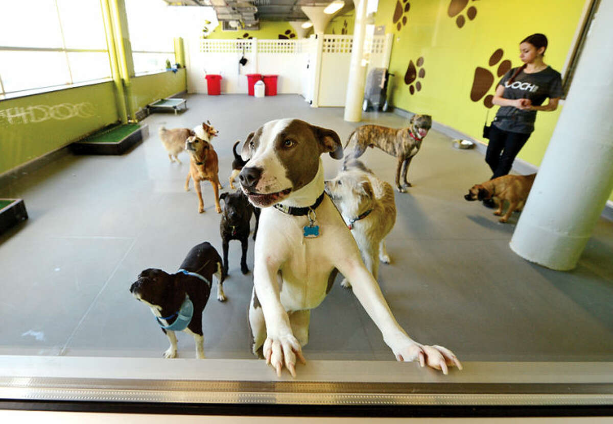 Hour photo / Erik Trautmann The new Pooch Dog Hotel, Daycare and SPA will have their grand opening Saturday April 5th.