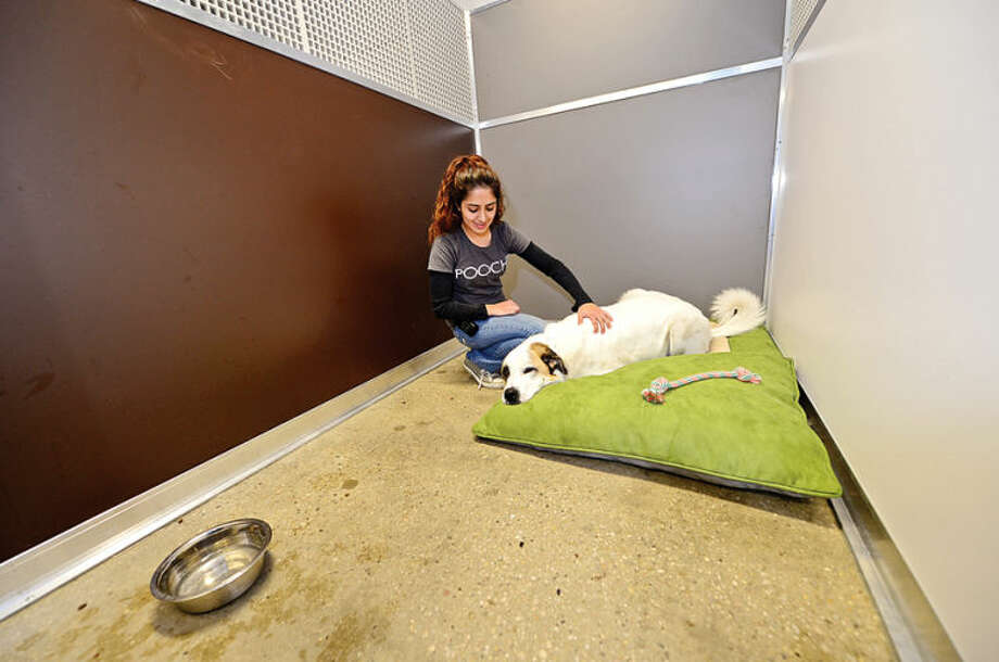 Hour photo / Erik Trautmann Pooch Dog Hotel assistant manager Stephanie Santiana cares for dogs while they stay at the new boarding facility in Norwalk. The Pooch Hotel will have their grand opening Saturday April 5th.
