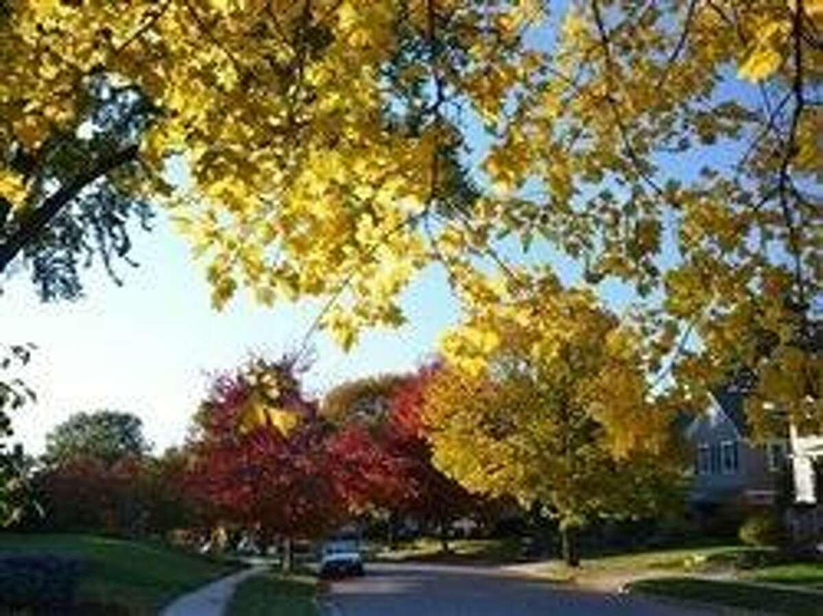 Still green and still great: National tree program marks 40 years of greening U.S. streets