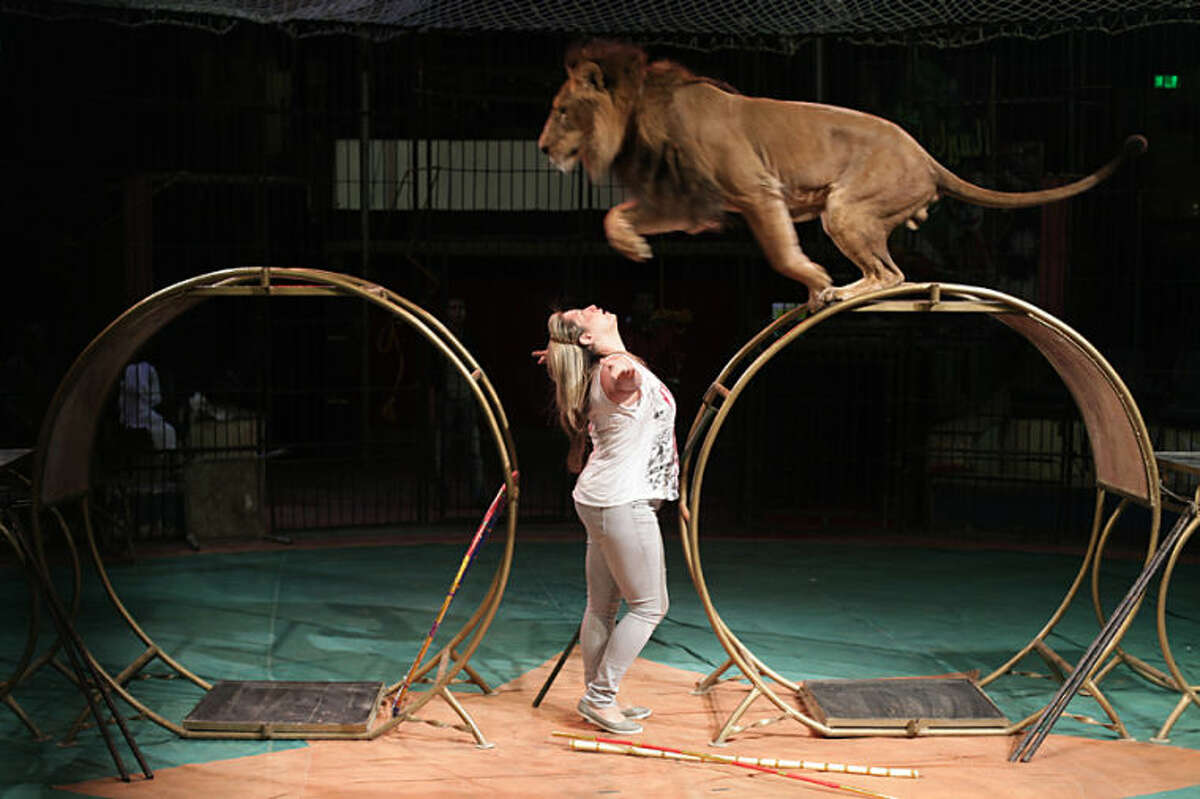 In this Tuesday, April 16, 2013 photo, Loba el-Helw, the Middle East's only female lion tamer, practices her routine at Egypt's National Circus in Cairo. Women activists say they won a major step forward with Egypt's new constitution, which enshrined greater rights for women. But months after its passage, they're worrying whether those rights will be implemented or will turn out to be merely ink on paper. Men hold an overwhelming lock on decision-making and are doing little to bring equality, activists say, and the increasingly repressive political climate is stifling chances for reforms.(AP Photo/Maya Alleruzzo)