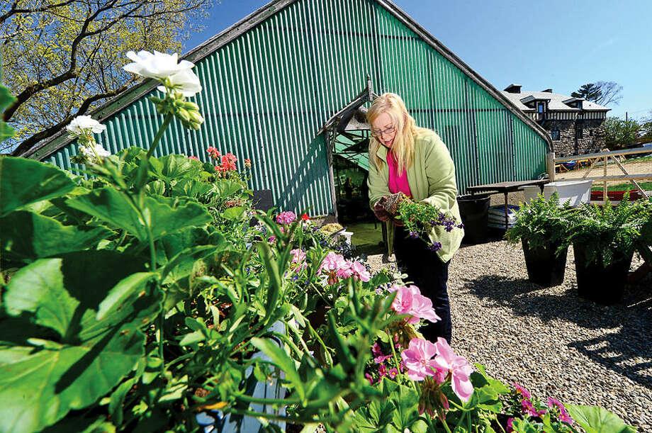 Hour photo / Erik Trautmann Rowayton Gardeners volunteer Danielle Fujioka makes potted plant designs for the annual Spring Plant Sale this Saturday.