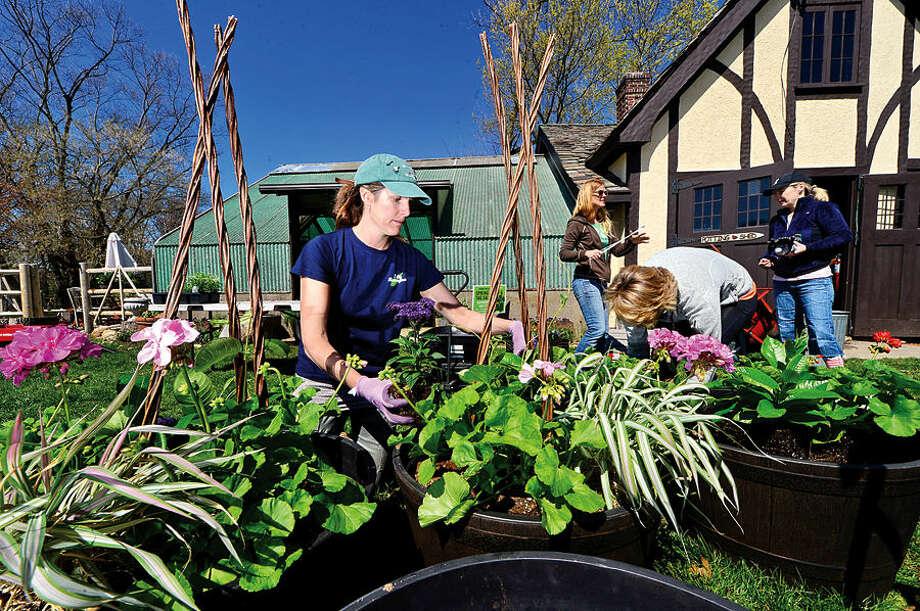 Hour photo / Erik Trautmann Rowayton Gardeners president Erin Combs makes potted plant designs for their annual Spring Plant Sale this Saturday.