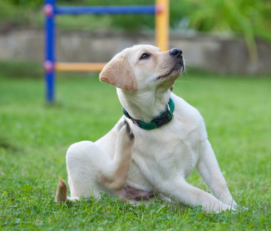Just like shedding, fleas and ticks are a seasonal problem for pets and their parents.