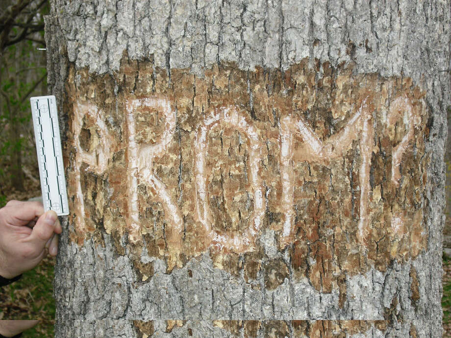 "This photo provided by the Wilton Police Department shows the word ""PROM"" carved into a tree. Police are looking for the person responsible."