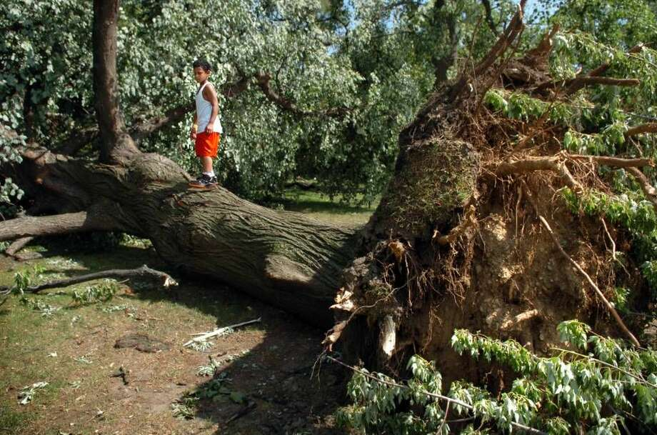Seven-year-old Daniel Ortiz, of Bridgeport, perches atop a fallen tree in Washington Park in Bridgeport Friday June 25, 2010. The damage was the result of a tornado with 100 mph winds that touched down in Bridgeport Thursday.