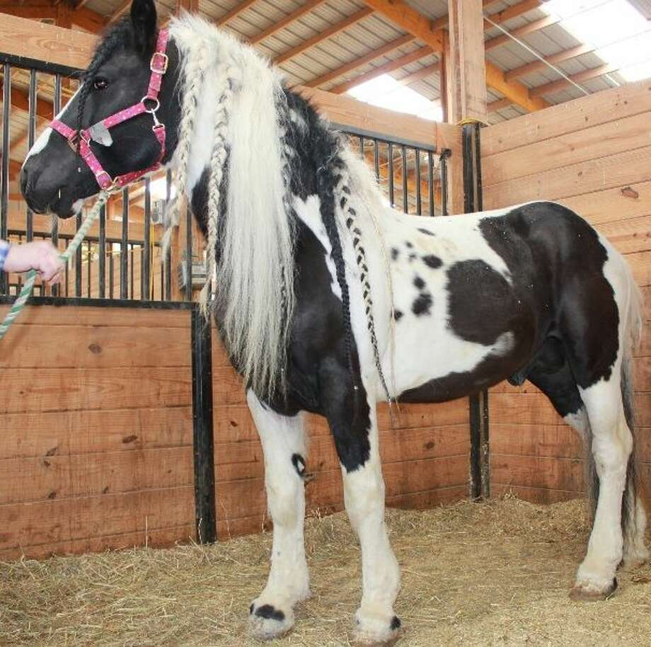 Among the 32 horses being auctioned by the state Department of Agriculture is The Windmaker.