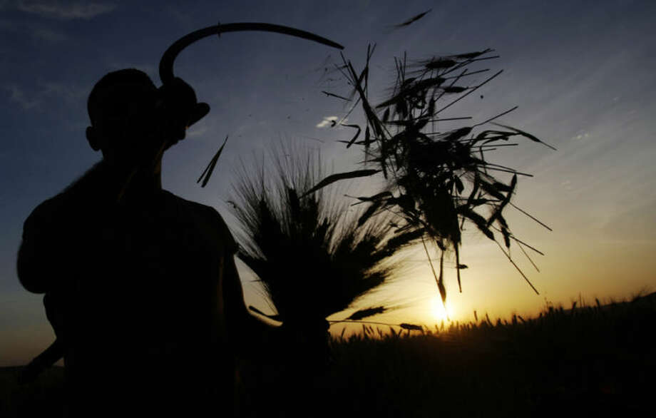 A Palestinian farmer harvests wheat on a farm near the West Bank city of Jenin, early Thursday, April 24, 2014. Hundreds of Palestinian workers depend on the wheat harvest as a source of income in the face of rising unemployment.(AP Photo/Mohammed Ballas)