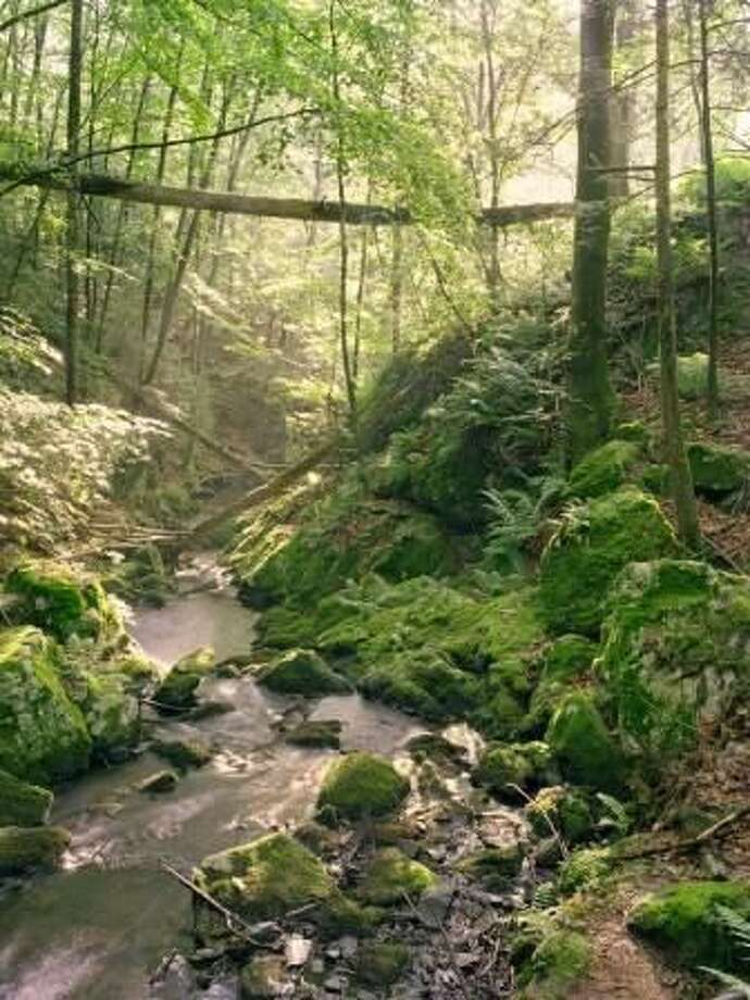 """The Bruce Museum's """"Mianus River Gorge: Photographs by William Abranowicz"""" exhibit features selected photos from Abranowicz that have captured the profound beauty and myriad faces of this primeval forest in our midst. It runs now throughSunday"""