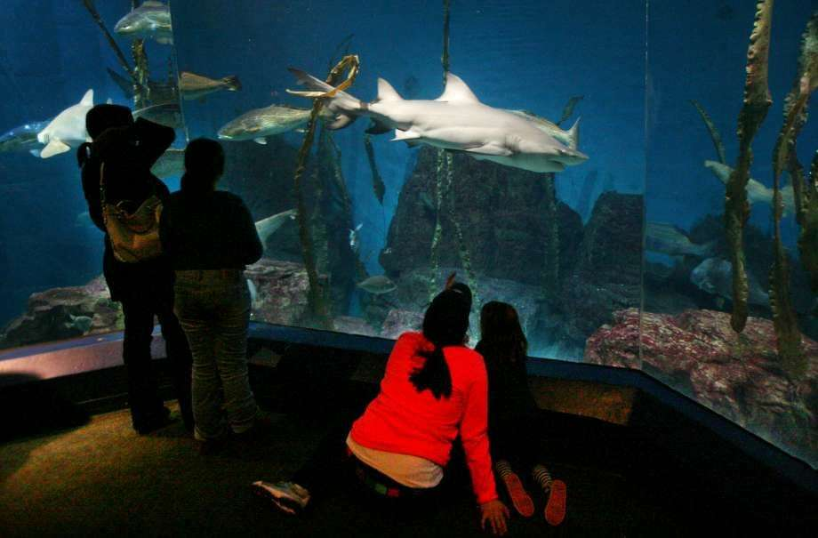 "The Maritime Aquarium in Norwalk, Conn. was named ""best family attraction"" in Connecticut in the May-June 2016 edition of Yankee Magazine. (Photo: Brain Pounds)"