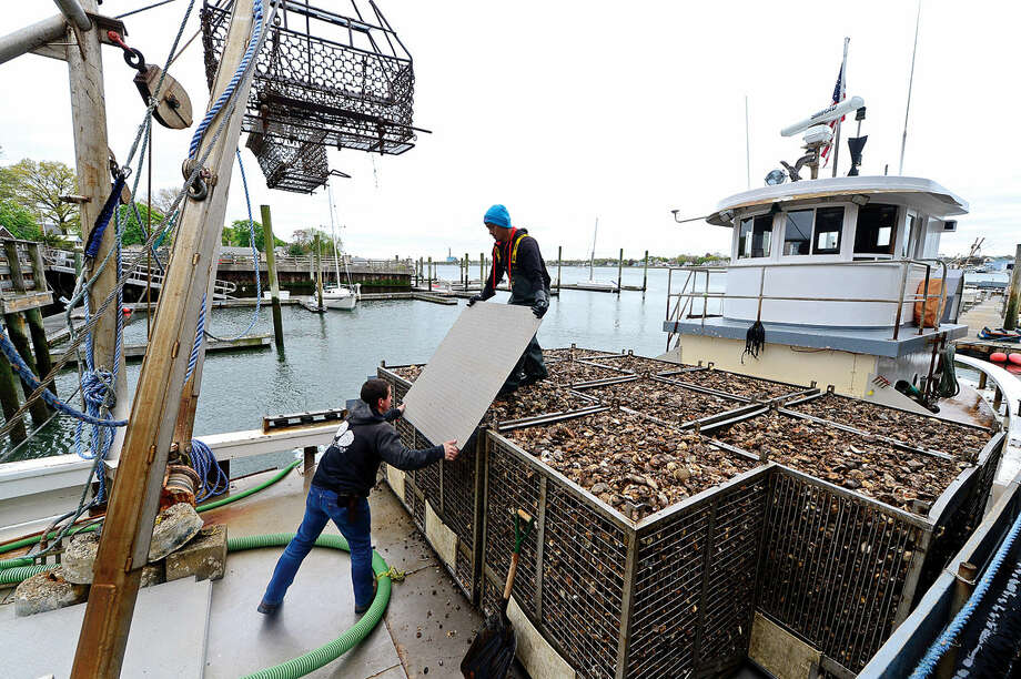 Copps Island Oysters employees offload oysters from Norwalk Harbor and Long Island Sound and ready them for market Thursday May 5, 2016, at the company's Norwalk, Conn. location. U.S. Senator Chris Murphy (D-Conn.) visited Copps Island Oysters, a third-generation, family-owned farm located that harvests oysters, clams, and lobsters, on Thursday to learn firsthand about Connecticut's $30 million shellfish industry. Murphy also discussed his investment plan and learned firsthand from Copps Island Oysters owner Norm Bloom and Harbor Watch advocates about how reducing nitrogen levels and ocean acidity and improving the water quality of the Sound will help grow Connecticut's shellfish industry.