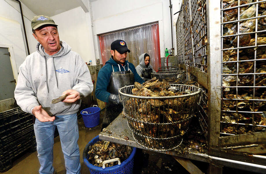 Copps Island Oysters owner Norm Bloom oversees employees as they process oysters from Norwalk Harbor and Long Island Sound Thursday May 5, 2016, at the company's Norwalk, Conn. location. U.S. Senator Chris Murphy (D-Conn.) visited Copps Island Oysters, a third-generation, family-owned farm located that harvests oysters, clams, and lobsters, on Thursday to learn firsthand about Connecticut's $30 million shellfish industry. Murphy also discussed his investment plan and learned firsthand from Copps Island Oysters owner Norm Bloom and Harbor Watch advocates about how reducing nitrogen levels and ocean acidity and improving the water quality of the Sound will help grow Connecticut's shellfish industry.