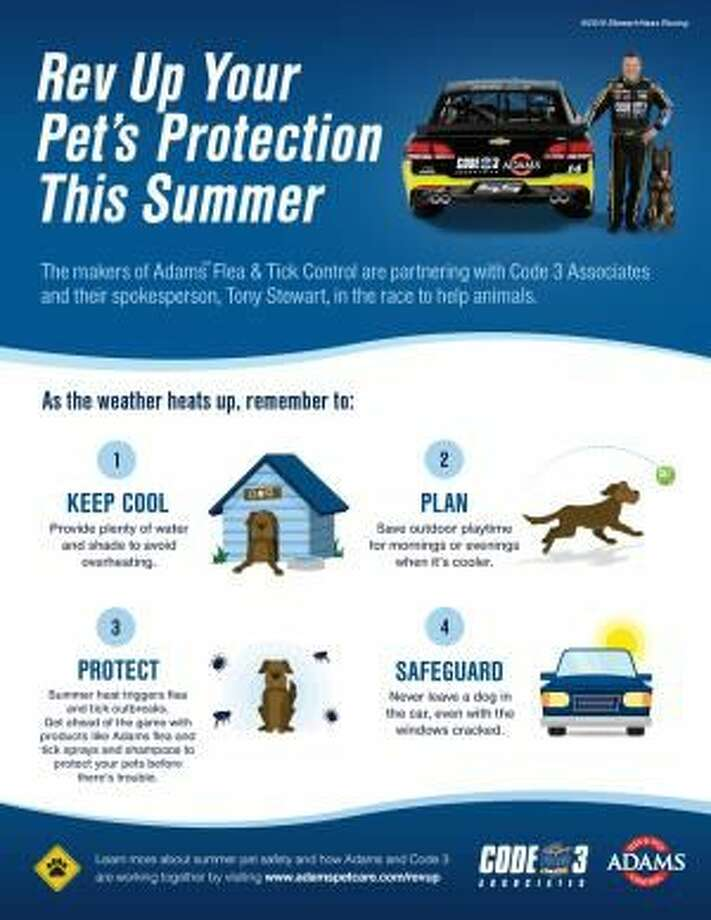 Tips to Protect Your Pet from Summer Dangers