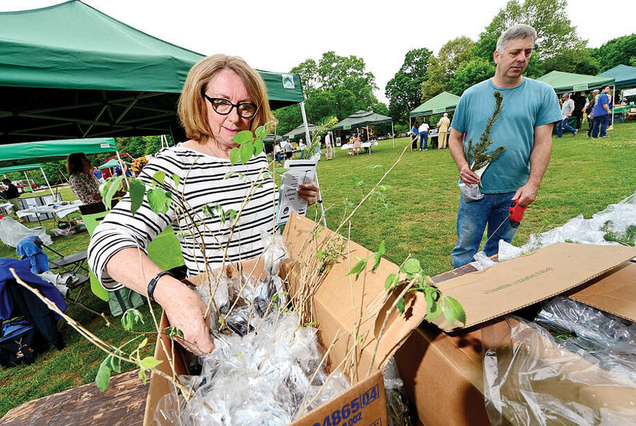 Hour photo / Erik Trautmann Judy Blanchard receives a free Hackberry sampling during the Norwalk Tree Alliance's 8th annul Tree Fest Saturday at Cranbury Park.