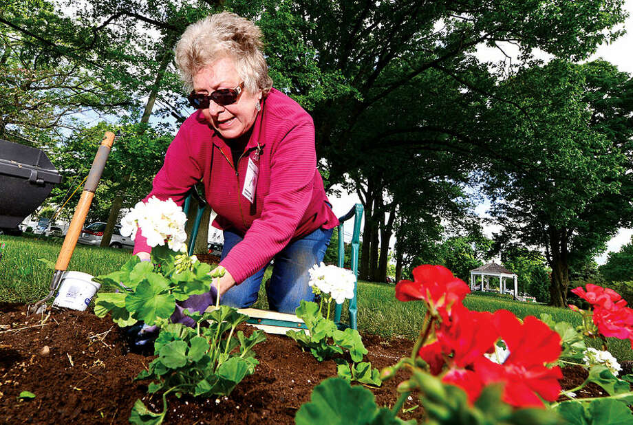 Hour photo / Erik Trautmann Norwalk Garden Club member Jenya Golovchenko participates in the annual planting of flowers on The Norwalk Green Wednesday in partnership with the First District Water Department.