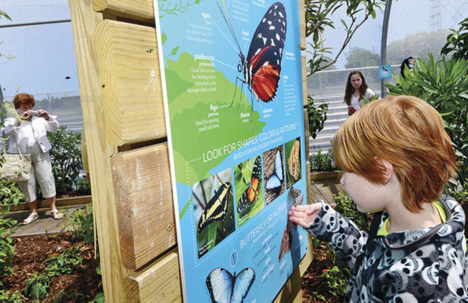 Hour photo / Erik Trautmann Visitors at the Maritime Aquarium Saturday including 7 year old Zachary Gough enjoy the abundance of butterflies on the opening day of the aquarium's new exhibit, Flutter Zone.