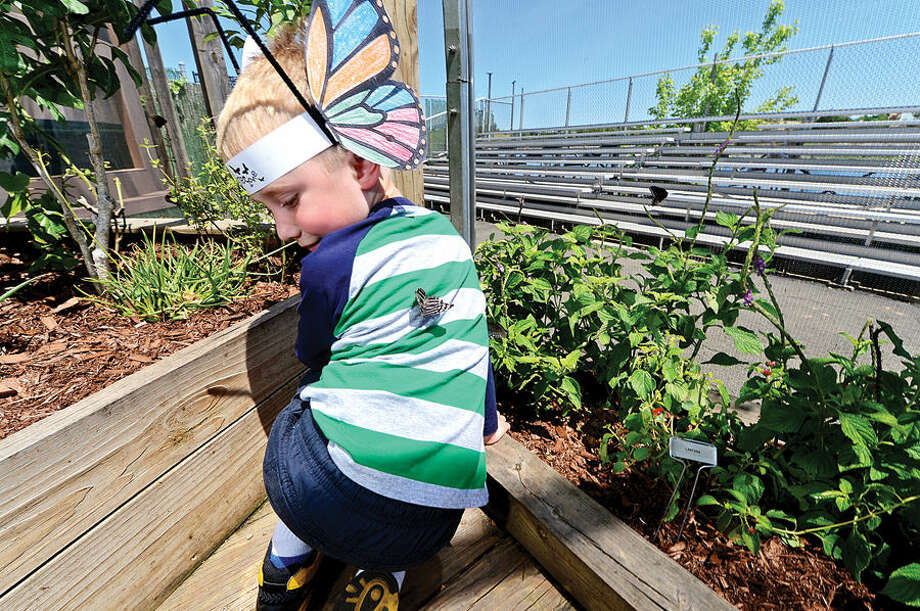 Hour photo / Erik Trautmann Visitors at the Maritime Aquarium Saturday including 5 year old Benjamin Chapman enjoy the abundance of butterflies on the opening day of the aquarium's new exhibit, Flutter Zone.