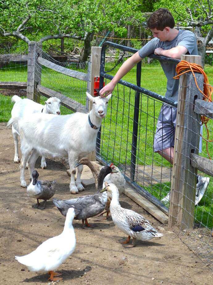 Kevin Lynch checks out a few of the animals in the Wakeman Town Farm menagerie on GreenDay.