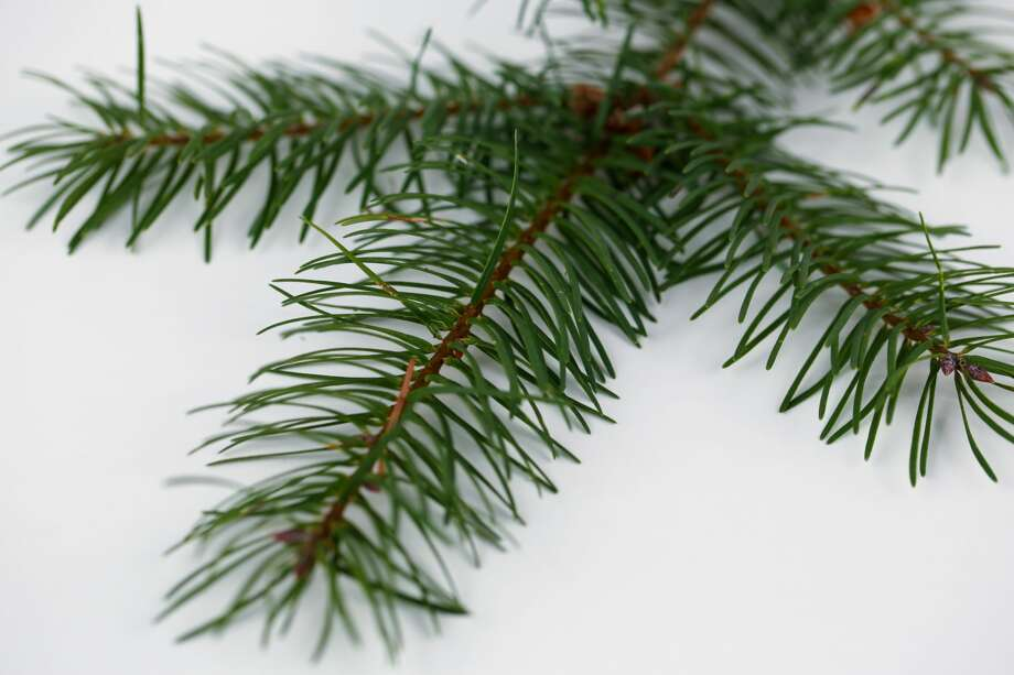 "Massachusetts - ""Diddledees"" are really just pine needles."