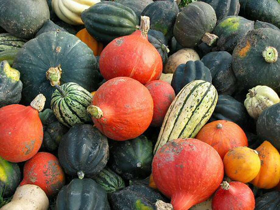 "Washington - ""Marblehead"" is used to refer to winter squash."