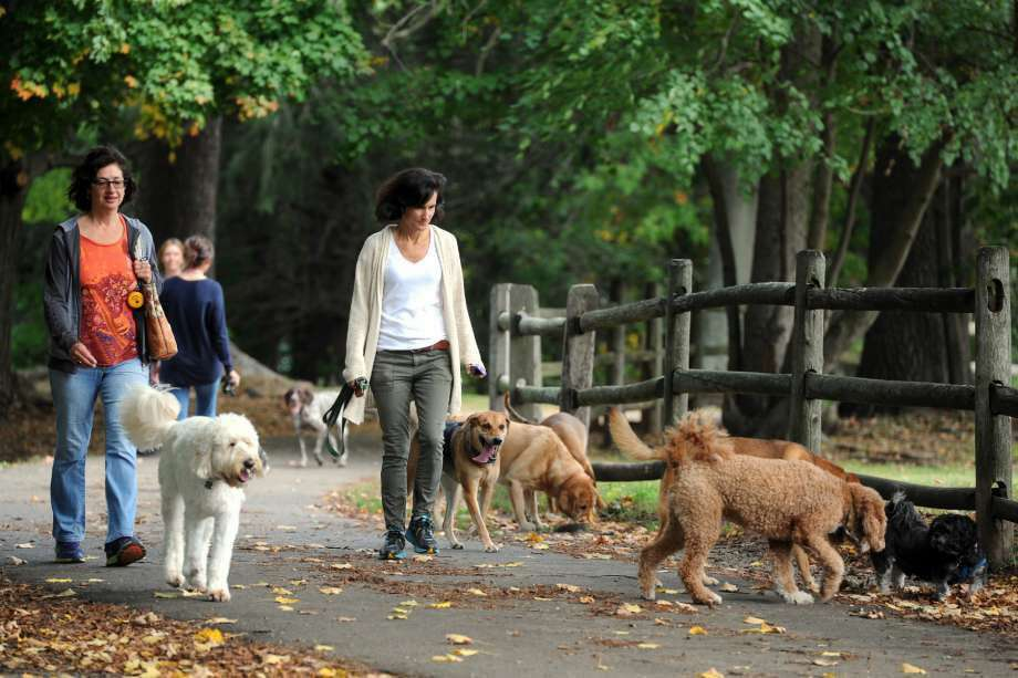 Ana Rogers and Jen Putman walk a bunch of dogs at Winslow Park, in Westport, Conn. Oct. 7, 2014. The park will be the site of the Westport Weston Chamber of Commerce's first Westport Dog Festival this June. (Photo: Ned Gerard)