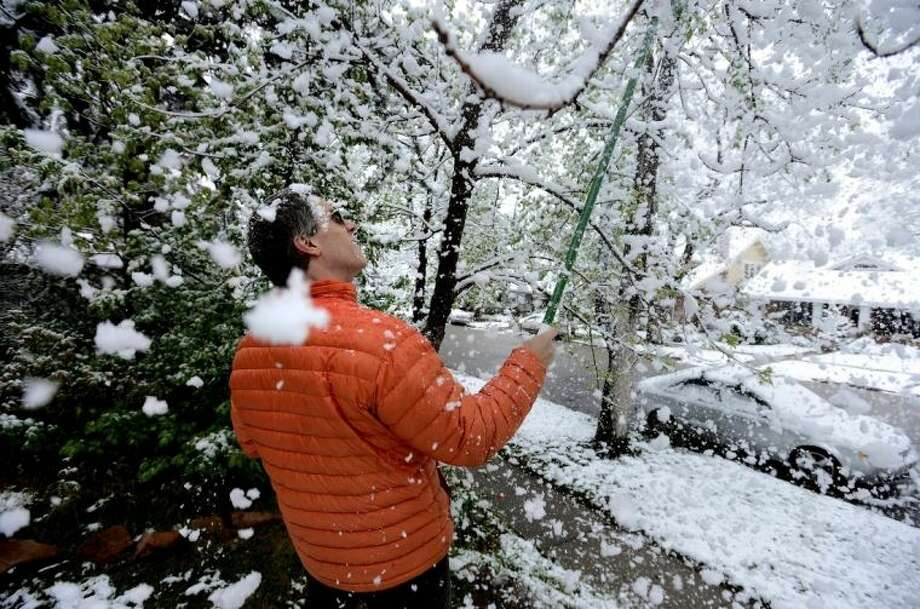 Brian Pryor takes a shower of snow as he clears the tree limbs in front of his home on University Hill in Boulder, Colo., on Monday, May 9, 2014. A spring storm that has brought over a foot of snow to parts of Colorado, Wyoming and Nebraska and thunderstorms and tornadoes to the Midwest was slowing down travelers and left some without power Monday morning. (AP Photo/The Boulder Daily Camera, Paul Aiken)