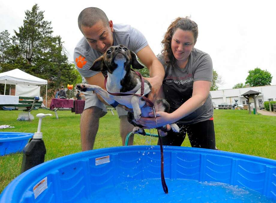 Reese, a 10-month-old Boston Beagle mix attempts a slippery escape from a doggie wash by volunteers Matt Quinones and Emma Wiegand, both of Stamford during the 3rd Annual Doggy Day Plaooza at the Stamford Dog Park on Saturday, May 21, 2016. K-9 participants were pampered with a doggie wash, photo booth and treats. The fundraiser was made possible by the generous donations of sponsors that included Cornell University Veterinarian Specialists, Ry's Ruffery, The Dog Nannies and Co., Blue Buffalo, K9 203 Dog Training, Conair Pet and Stamford Subaru.